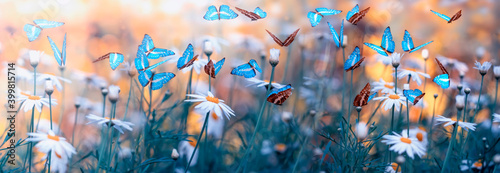 Spring natural landscape with wild flowers on meadow and fluttering butterflies on blue sky background. Dreamy soft air artistic image. Soft focus, author processing. - fototapety na wymiar