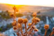 Moldova, Autumn 2020. Thistles At Sunset