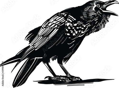 crow on a white background Fototapet