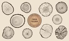 Wood Tree Trunk Rings - Hand Drawn Vector Set