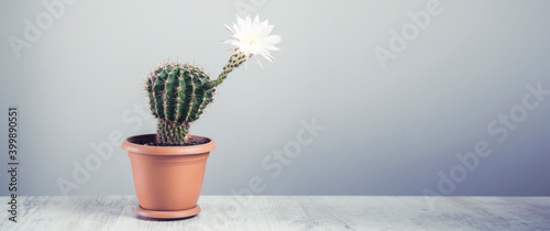 Foto flowering cactus on grey table