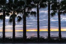 Palm Trees On The Yalta Embankment