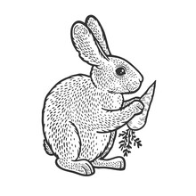Rabbit Hare Bunny With Carrot Sketch Engraving Vector Illustration. T-shirt Apparel Print Design. Scratch Board Imitation. Black And White Hand Drawn Image.