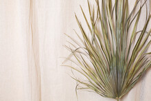 Tropical Palm Dry Leaves On Natural Cotton Fabric Background