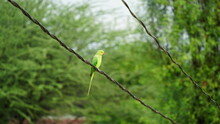 Parrot With Nature. Parrots Also Known As Psittacines With Blurred Background.
