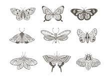 Boho Vintage Vector Art Design With Bohemian Butterfly. Isolated Insect Icon Set In Simple Style, Hand Drawn Illustration Ornate Collection, Black On A White Background.