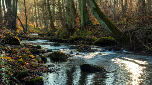 Foto stream in the forest