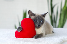 Serious Cat With Soft Plush Heart Toy. Love, Valentine Day, Pets Friendly And Care Concept. Selective Focus