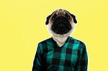 Collage - Portrait Of A Man With A Pug Head. Magazine Culture Concept In Modern Style.
