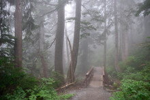 Wooden Bridge In Pacific Rainforest In Foggy Day. North Vancouver. British Columbia. Canada
