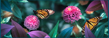Lovely Monarch Butterflies On Pink Flowers In A Fairy Garden. Summer Spring Background. Banner Format.