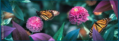 Obraz na plátně Lovely monarch butterflies on pink flowers in a fairy garden
