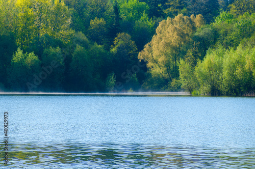 Photo morning landscape of summer forest over the pond