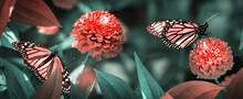 Butterflies On Red Flowers In A Fairy Garden. Summer Spring Background.