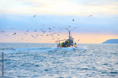 Carta da parati Fishing boat surrounded by black-headed gulls in coming back to the port at the