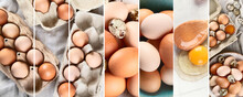 Raw Chicken Eggs Collage. Food Concept.