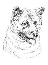 American Akita Hand Drawing Portrait Kids Coloring Page Line Art Illustration Vector