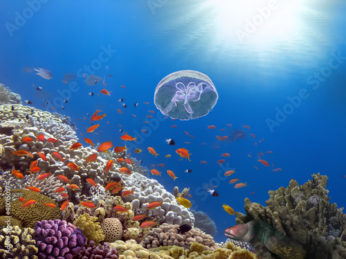 Canvastavla Coral Reef and Tropical Fish. Red Sea
