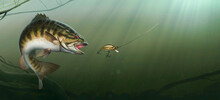 Smallmouth Bass At The Bottom Of The Lake Realistic Illustration. Big Bass Perch Fishing In The Usa On A River Or Lake At The Weekend. Predator Attack On The Bait Wobbler.