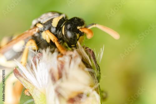 Macro di una vespa Fotobehang