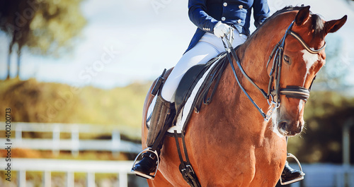 Fototapeta A beautiful bay horse with a rider in the saddle walks in a paddock with a white fence on a sunny summer day. Equestrian sports. Horse riding. obraz