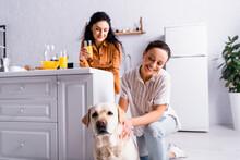 Smiling Lesbian Hispanic Woman Petting Labrador Near Partner With Orange Juice In Kitchen On Blurred Background