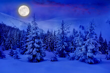 Full Moon Rising Above The Winter Fir Forest Covered Of Snow In Mountains. Christmas Night. Landscape Winter