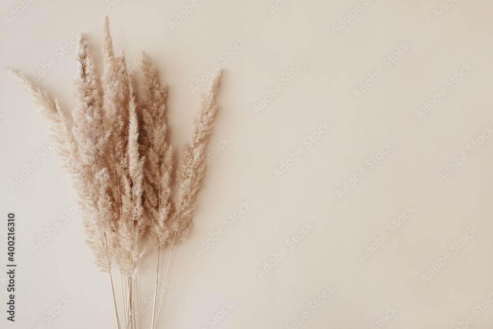 Fototapeta Dry pampas grass reeds agains on beige background. Beautiful pattern with neutral colors. Minimal, stylish, monochrome concept. Flat lay, top view, copy space. Set sail champagne trend color 2021