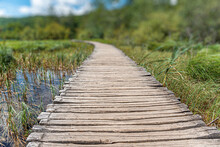A Path Made Of Wooden Boards Among The Lake And Forest.