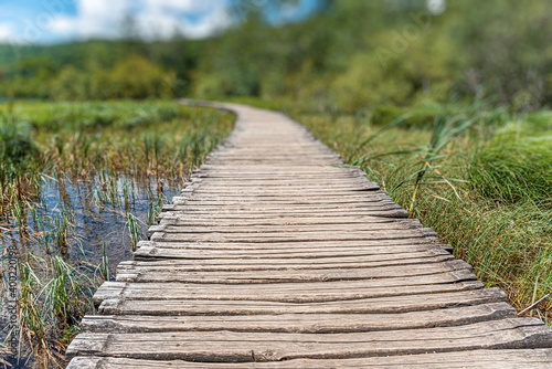 Fotomural A path made of wooden boards among the lake and forest.