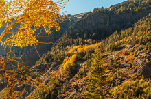 Fall Color In The Uncompahgre Gorge On The Million Dollar Highway, Ouray, Colorado, USA