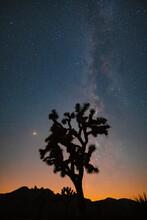 Joshua Tree With Mars And Milky Way