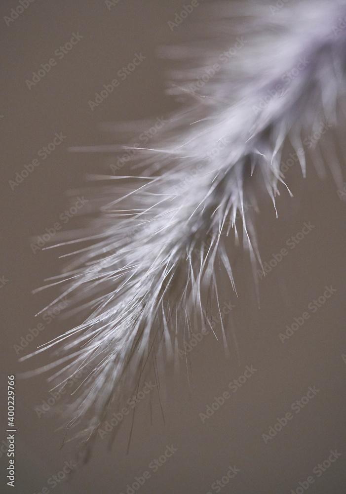 macro photography of wild air