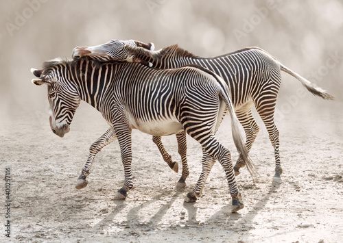 Moment of tenderness between a pair of zebras on blurred backgrounds Fotobehang