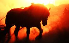 ばんえい競馬の朝調教