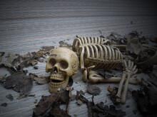 Skull, Halloween, Human