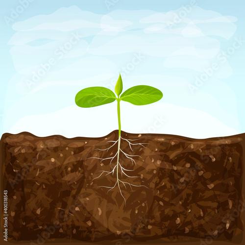 Fototapeta vegetable seedlings growth in fertile ground on blue sky background