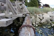 Chain On Log