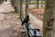 Crow In The Park