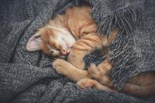 Cute Little Ginger Kitten Is Sleeping
