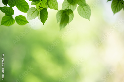 Fototapety, obrazy: Nature of green leaf in garden using as background natural wallpaper