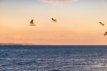 The Seagulls Flying Over The Sea Near Beppu City In Oita, Japan