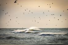 Seagulls On The Beach, Waves, Texel Island, Netherland