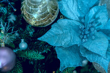 Blue Poinsettia Symbol Of Christmas On A Dark Background And Glass Balls On A Fir Branch.
