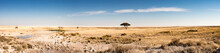 Tree In The Plains Of Etosha National Park On The Edge The Salt Pan - Pano View