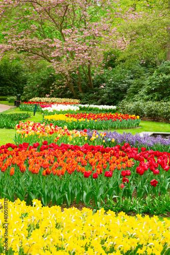 Fototapeta Formal spring garden
