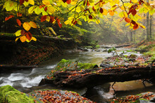 Waterfall In The Autumn Beech Forest.