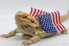 Bearded Dragon With An American Flag