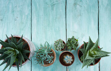 Beautiful Succulents On Turquoise Wooden Surface