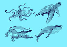 Set Marine Graphic Animals. Illustration. The Whale,  Crocodile, Octopus, Turtle Consist Of Lines.Digital Elements Design  For Business Cards, Invitations, Gift Cards, Flyers And Brochures, Web.